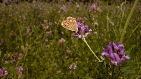 http://la.petite.fleur.violette.cowblog.fr/images/Nouveauxarticles/papillon.jpg